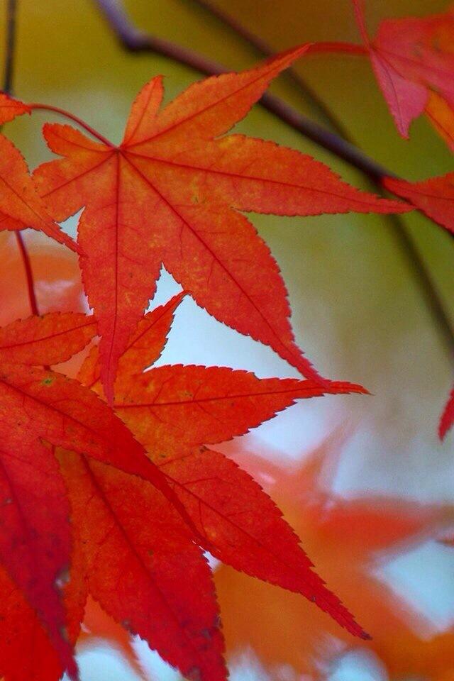 植物秋天风景图